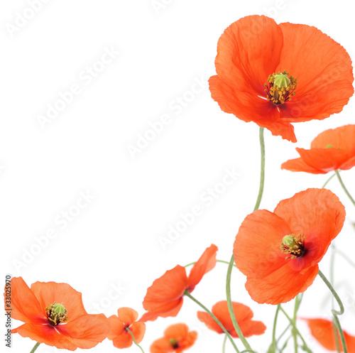 Papiers peints Poppy Poppies border