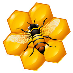 Bee on a part of honeycomb