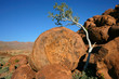 Tree and granite rocks, Namibia, southern Africa
