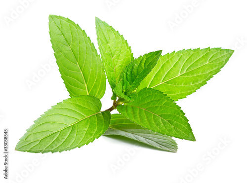 canvas print picture Fresh green mint isolated on white
