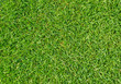 Rasen Nahaufnahme - Grass texture close-up - 33042931