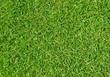 Rasen Nahaufnahme - Grass texture close-up