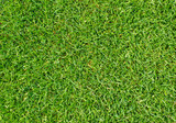 Rasen Nahaufnahme - Grass texture close-up