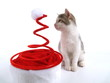 Originelle Weihnachtskappe und Babykatze/ LS