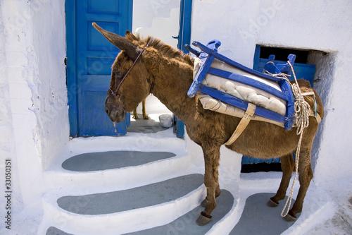 Foto Spatwand Ezel grèce,cyclades,amorgos : village de potamos, âne