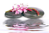 therapeutic zen / spa stones with flowers isolated poster