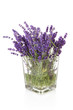 Bouquet of plukked lavender in vase over white background