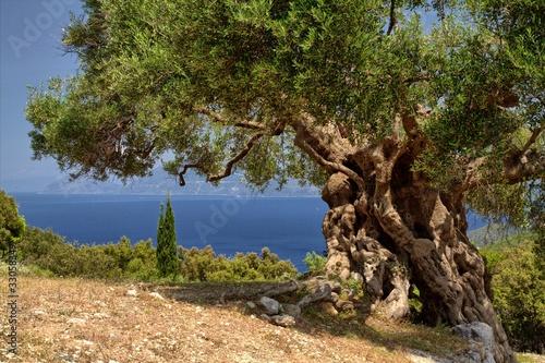 Papiers peints Oliviers Griechische Inseln