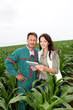 Farmer and researcher analysing corn plant