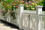 White Gate with Yellow, Pink and Red Climbing Rose Bushes