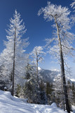 Wald im Alpstein
