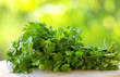 Coriander on green background.