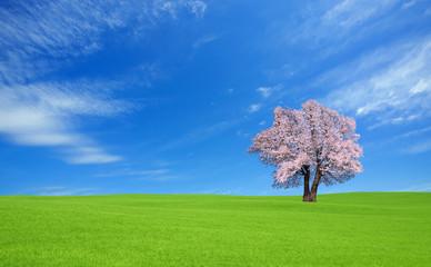 green hill and Sakura tree.