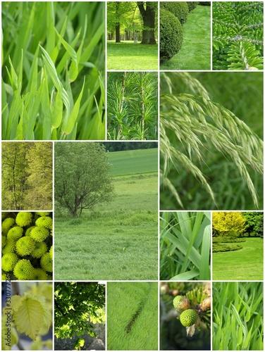 Wszechobecna zieleń