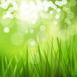 Nature background with grass.