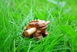 Handmade wealthy frog poster