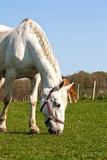 Pferde in Ranzow 3