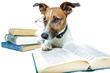 Hund studiert aus dem Buch