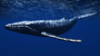 クジラ - 33097561