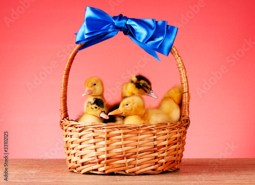 Little yellow fluffy ducklings in basket on red background