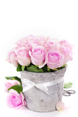 roses in a pot