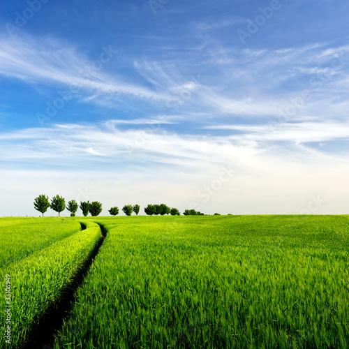 Fototapeten,landschaft,feld,baum,bäume