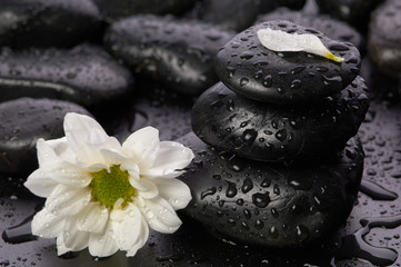 balanced stones and flower