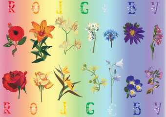 rainbow flowers collection
