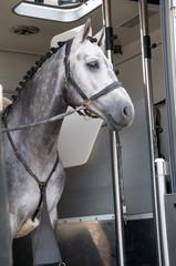 Im Pferdetransporter