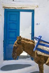 grèce,cyclades,amorgos : village de potamos, âne