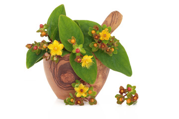 St Johns Wort Herb and Flowers