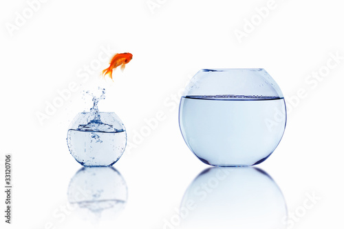 gold fish in a fishbowl - 33120706