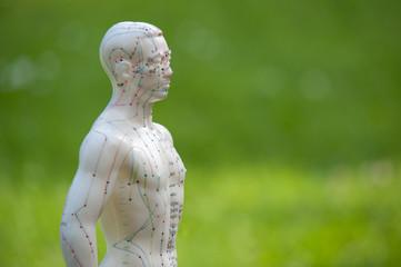 Akupunkturmodell im Grünen