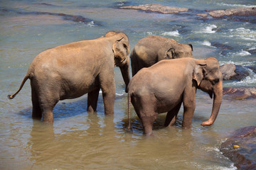 Elephants' trio