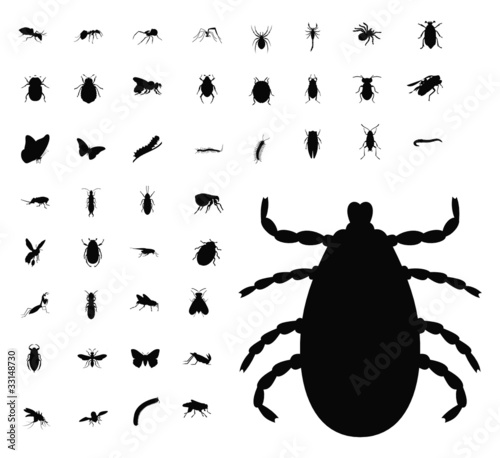 insect silhouette collection