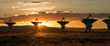 canvas print picture - Very Large Array as Sunset (Satellite Dishes from Contact)