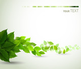 Fototapety branch with fresh green leaves