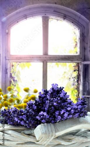 Obraz Lavendel