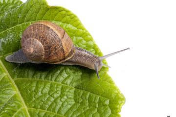 snail on white