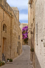 narrow road with flowers
