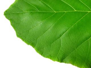Vivid Green leaf texture