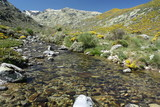 glacial spring in Sierra de Gredos poster