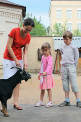 Boy, girl and mother, feed mountain goat in zoological garden