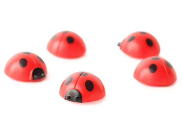 five red small ladybugs isolated on white