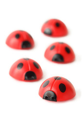 five red small ladybugs are crawling isolated on white