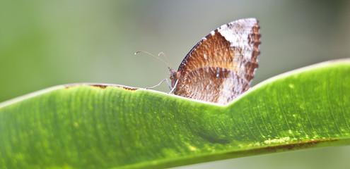 Butterfly © Matthias Buehner