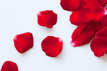 viele rosenblütenblätter