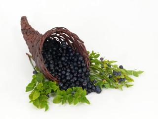 Füllhorn der Früchte