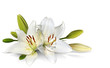 Fototapeten,lily,ostern,floral,pure