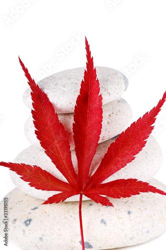 Ghiaia con foglia di acero rosso di tesgro tessieri foto for Foglia acero